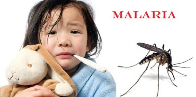 Cara Mengobati Malaria